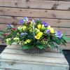 Sweet Scented Basket of Freesias -