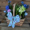 Scented Spring Basket of Hyacinths -