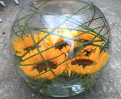 sunflower-goldfish
