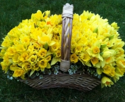 basket-of-daffodils