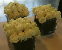 white-rose-cubes