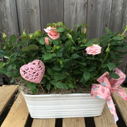 Rose Buds for Mother's Day