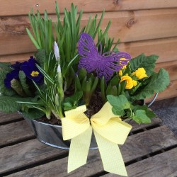 Planted Container of Spring Bulbs
